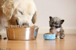 来看看那些你不曾见过的迷你可爱至极的小狗吧