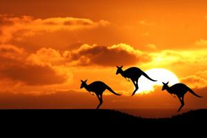 小女人在澳洲的苦逼生活经验总结
