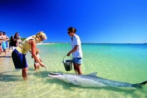 家人来旅游?手把手教你100%获批的澳洲旅游签!