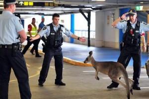 前往澳洲各地机场最便宜的方法!